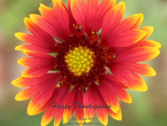 Thanksgiving flower 4-1