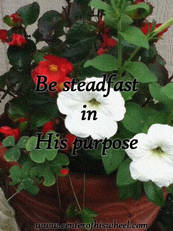 Stead Fast In His Purpose