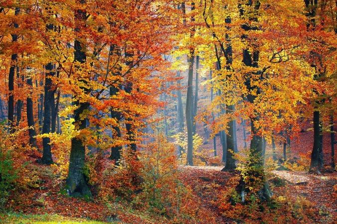 woods-1072819_1920