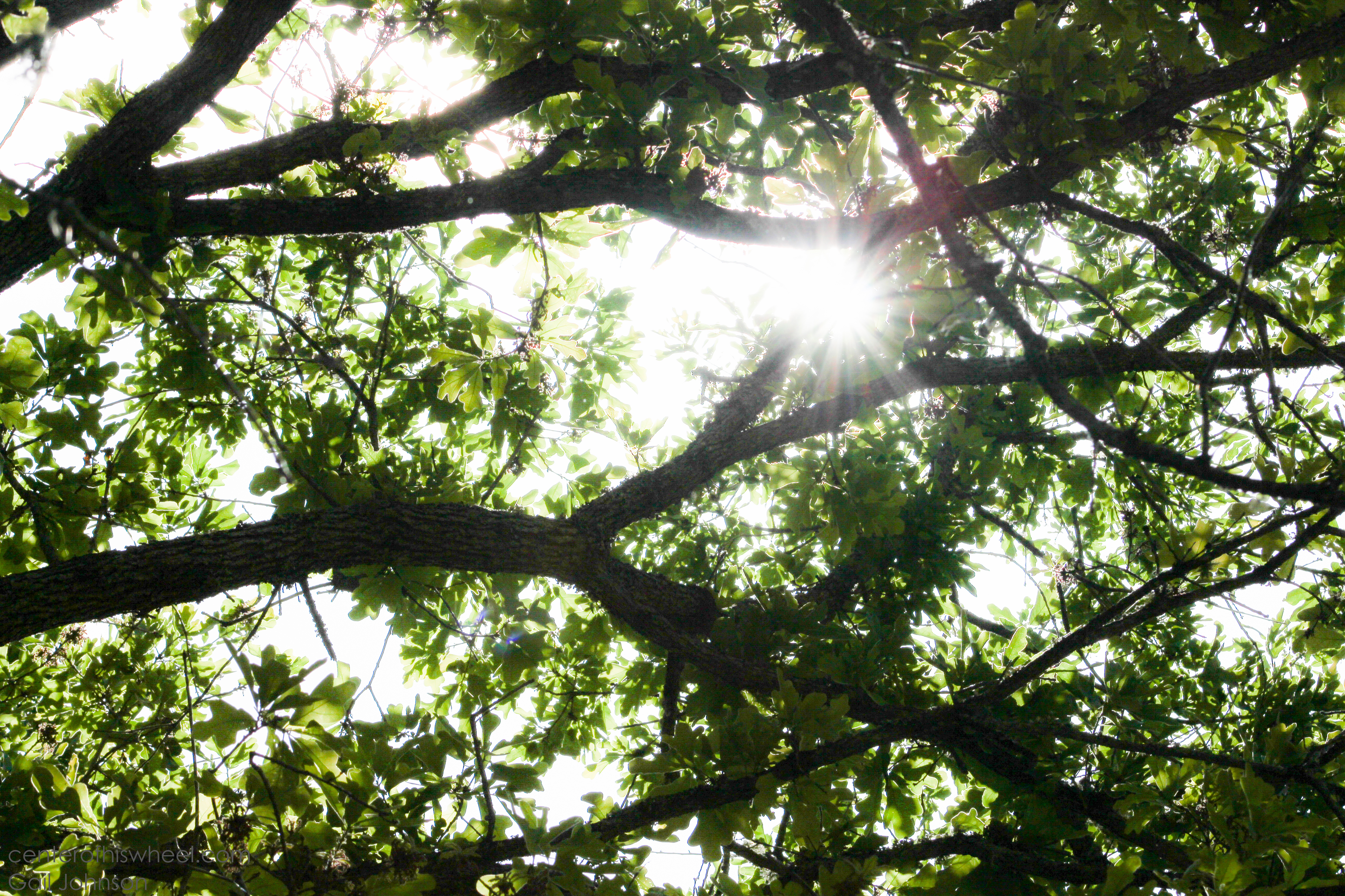 Perfect Tree Canopy CHW-1