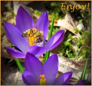 Wendy's Bee